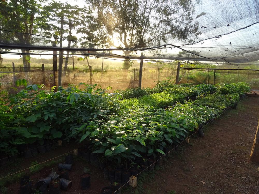 One Tree Planted nursery